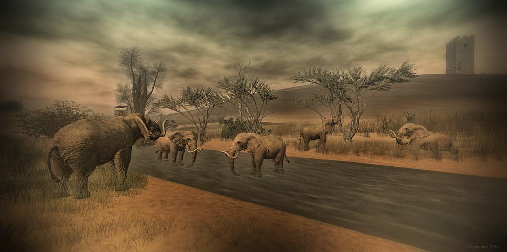 Elefanten Devin 2