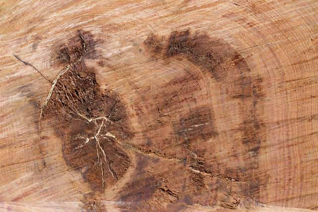 , Cut wood