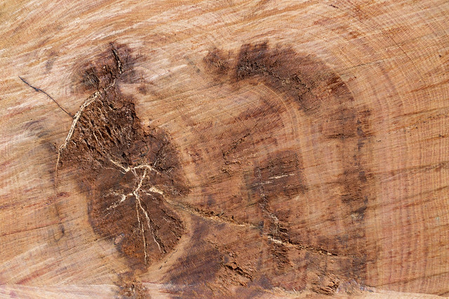 33091784262_9f8edc695d_z Cut wood