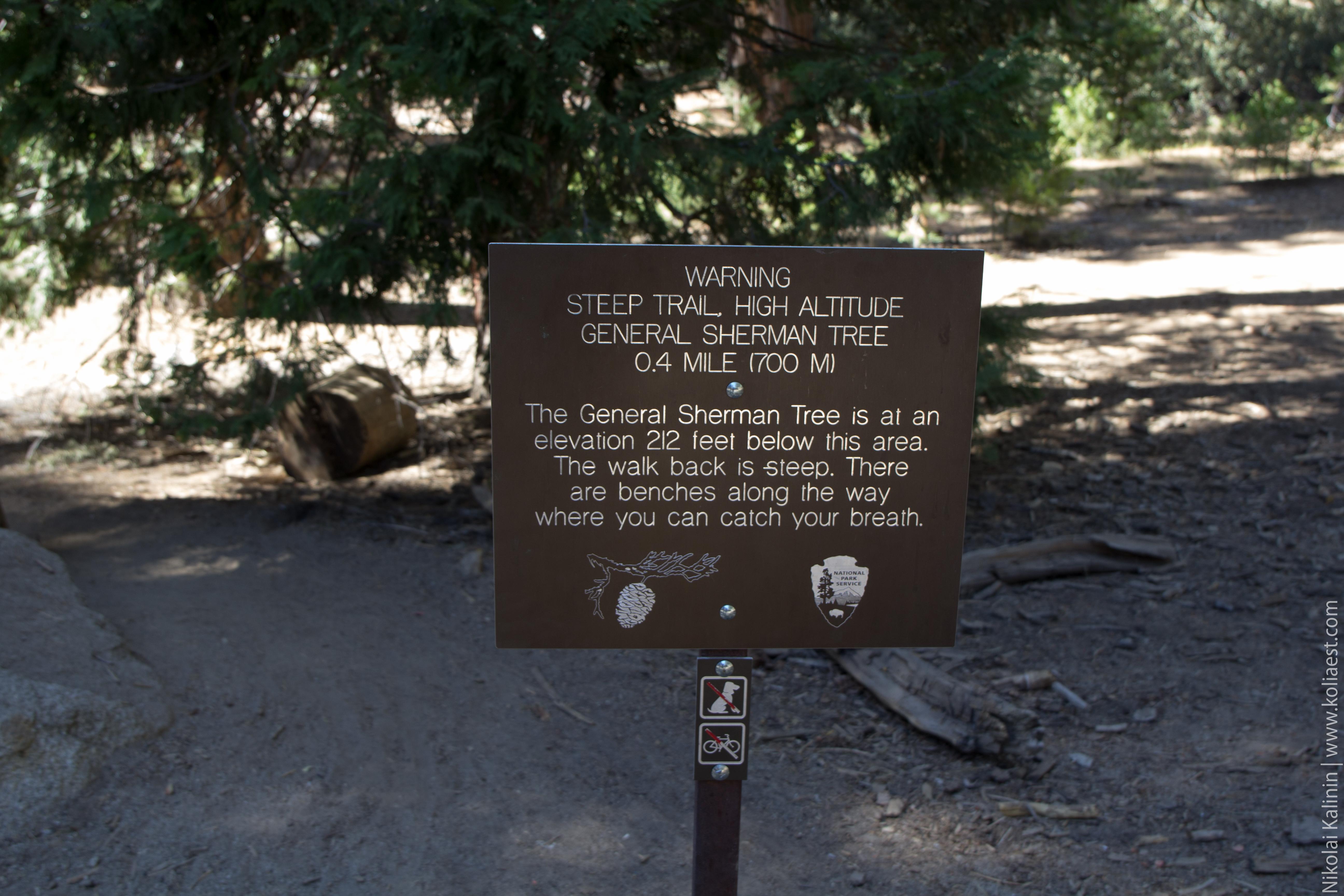 Sequoia-34