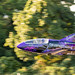 """The 2015 FLS Microjet piloted by Justin """"Shmed"""" Lewis"""