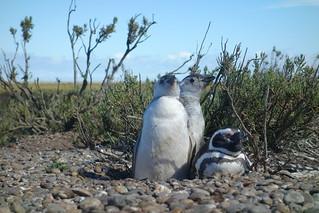 Reserva Natural Cabo Vírgenes, Argentina