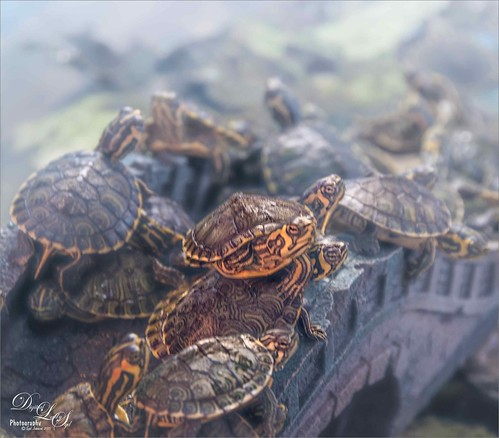Image of turtles in a bowl.