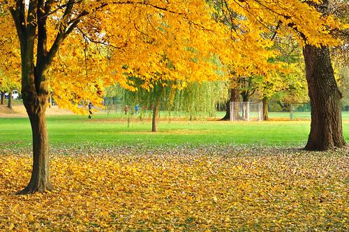 Ladenburg Neckar Neckarwiese Herbst Herbstfarben Foto Brigitte Stolle Oktober 2015