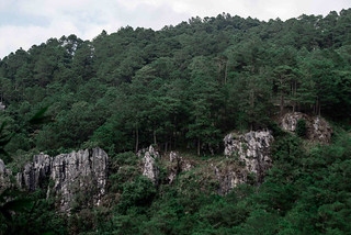 SAGADA pine trees-2_6