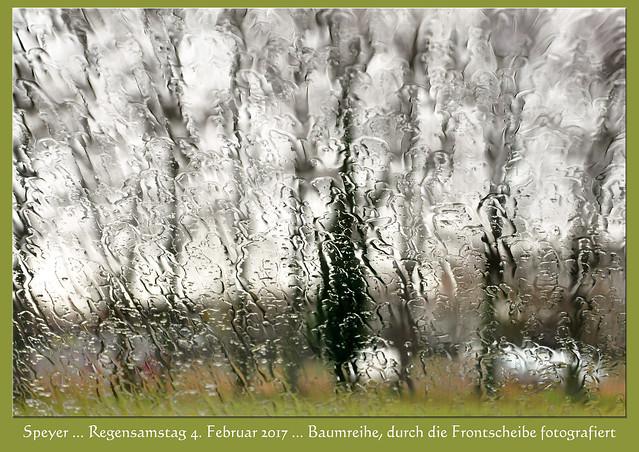 Regensamstag, 4. Februar 2017: Baumreihe, durch die regennasse Frontscheibe fotografiert ... Nähe Technik-Museum Speyer ... Foto: Brigitte Stolle, Mannheim