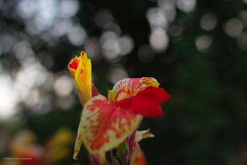 Flores en el bancal