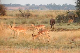 Parque Nacional Bwabwata, Namibia