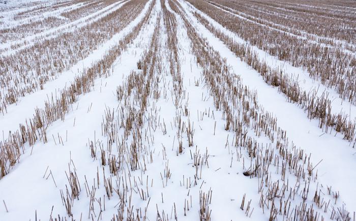 Kynnetty pelto talvella korsipelto
