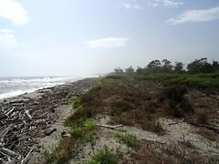 La plage de l'étang Del Sale bien prise par les bois flottés