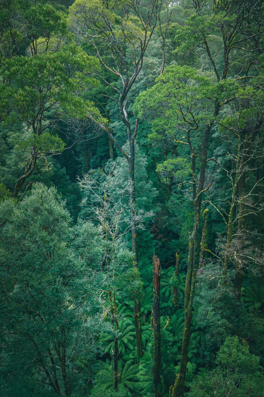 Foliage, Otway Park, Australia