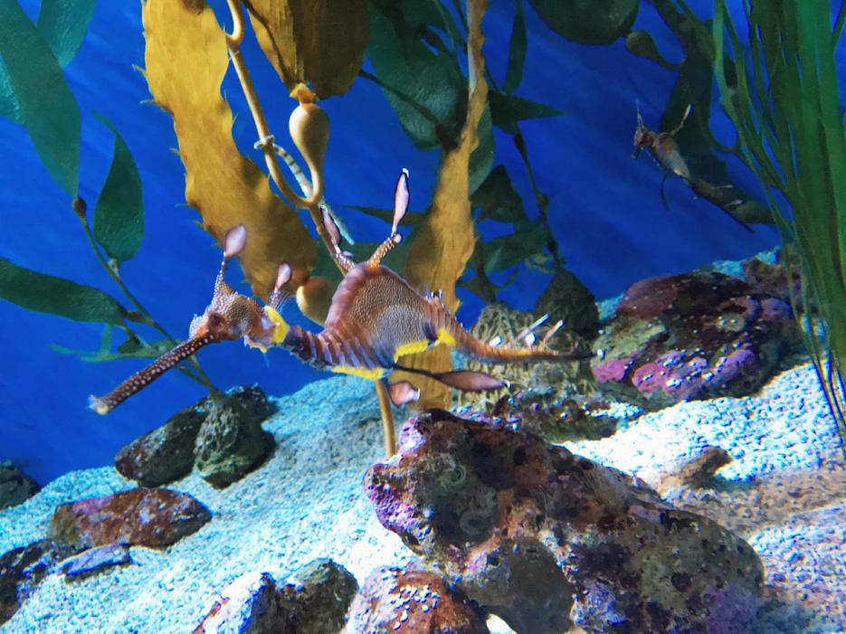 060516_aquarium38