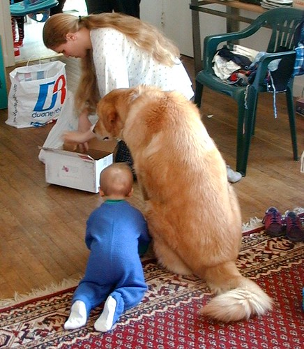 Giving Cpr To A Dog