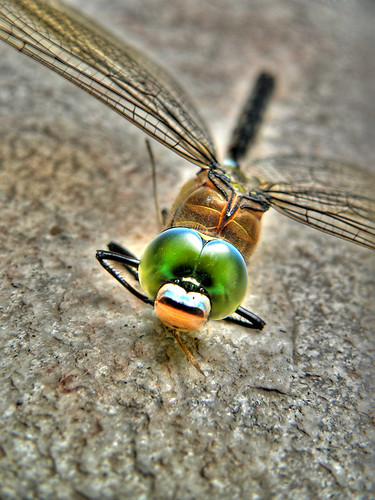 dragonfly | by unbelivable14