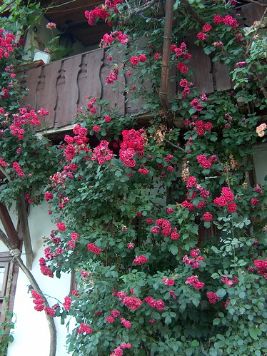 roses on a balcony this balcony belongs to a house on a. Black Bedroom Furniture Sets. Home Design Ideas