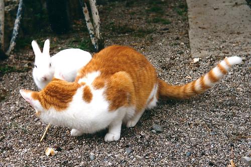 Katze Kaninchen Annäherung weiß rot Tierfreundschaft