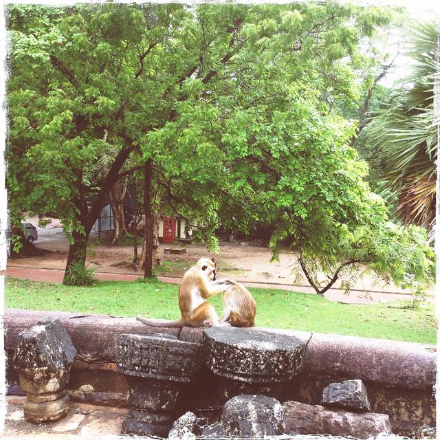 081-Polonnaruwa