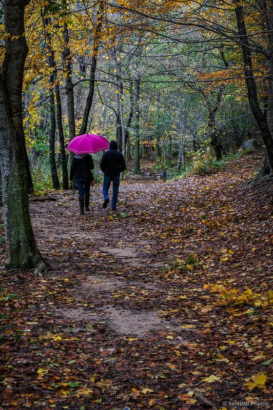Un paraguas llamativo