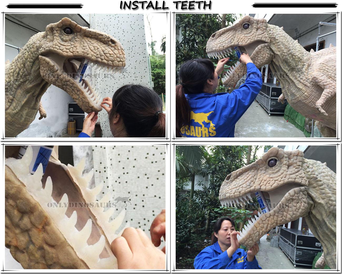 Install Teeth