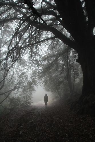 Doane Trail