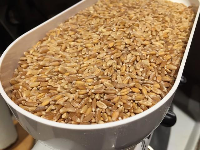 Hard White Wheat+Emmer+Spelt