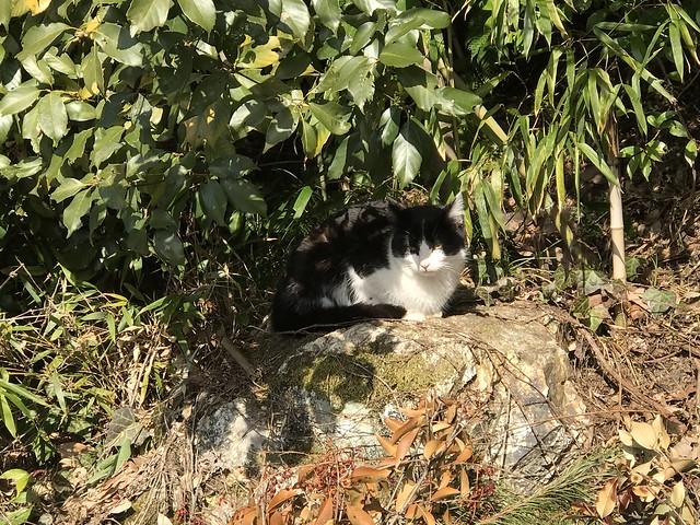 尾張富士 駐車場 猫