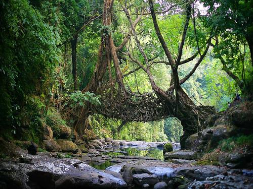 मावफलांग जंगल