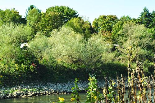 Mannheim Wörthel Naturschutzgebiet Natur- und Landschaftsschutzgebiets Unterer Neckar Oktober 2015 Foto Brigitte Stolle Mannheim