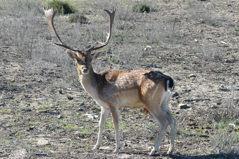PN. Doñana, dunas, pinos y bichos 23415497956_d96a4a5bed_c