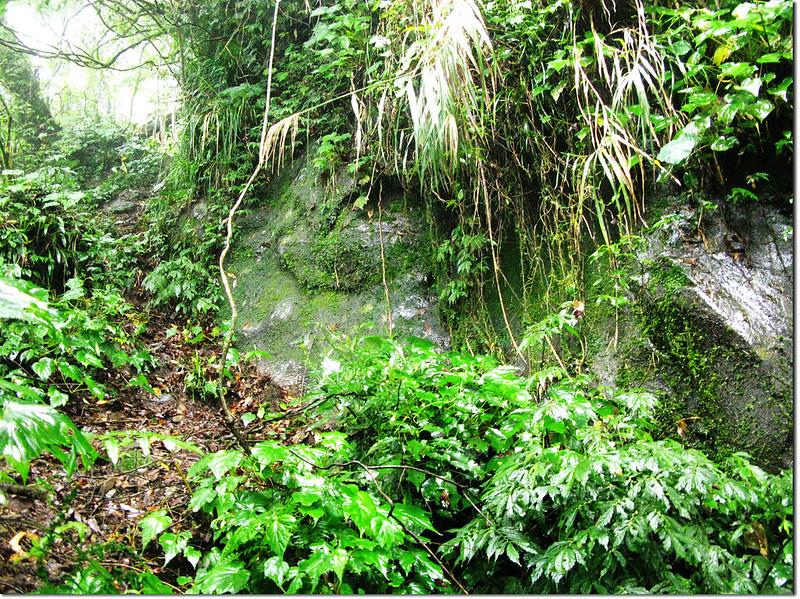 伍伴山登山途中岩壁