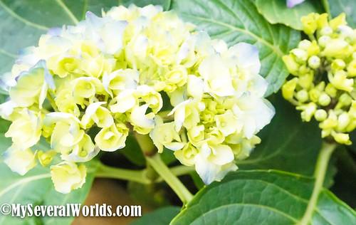2017 Yangmingshan Flower Festival-03313