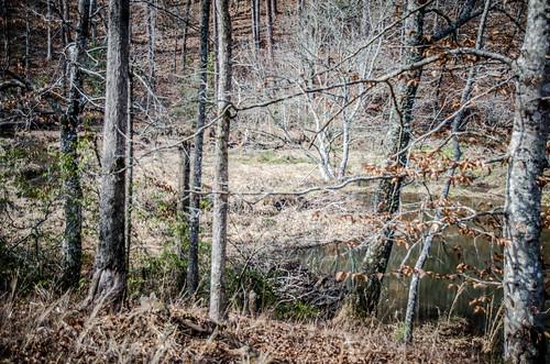 Todd Creek Falls-035