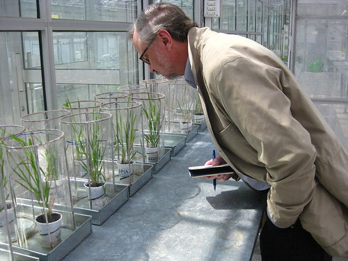 David Marshall, research leader of the USDA-ARS Plant Science Research Unit, examining rust infections in a greenhouse in Muree, Pakistan