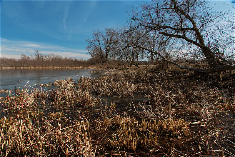 Lockport Wetland