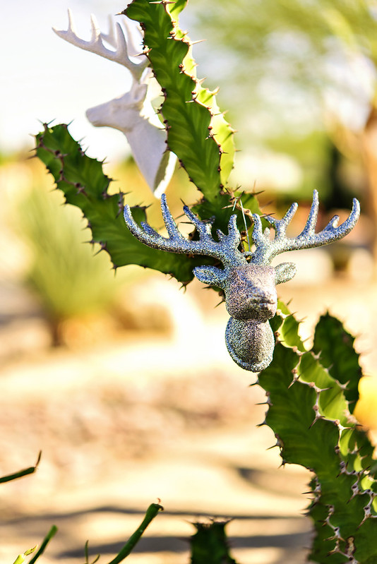 how to decorate a desert yard for christmas