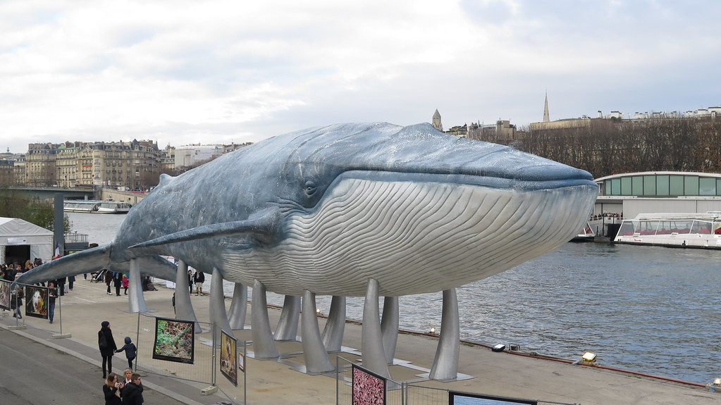 COP21 期間在巴黎街頭展出的藝術作品:鯨魚