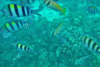 Coron - Coron Island wreckage underwater