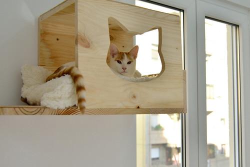 Gary, gatito blanco y naranja cruce Van Turco esterilizado muy activo nacido en Julio´16, en adopción. Valencia. ADOPTADO. 31333202040_ec43fb8f1b