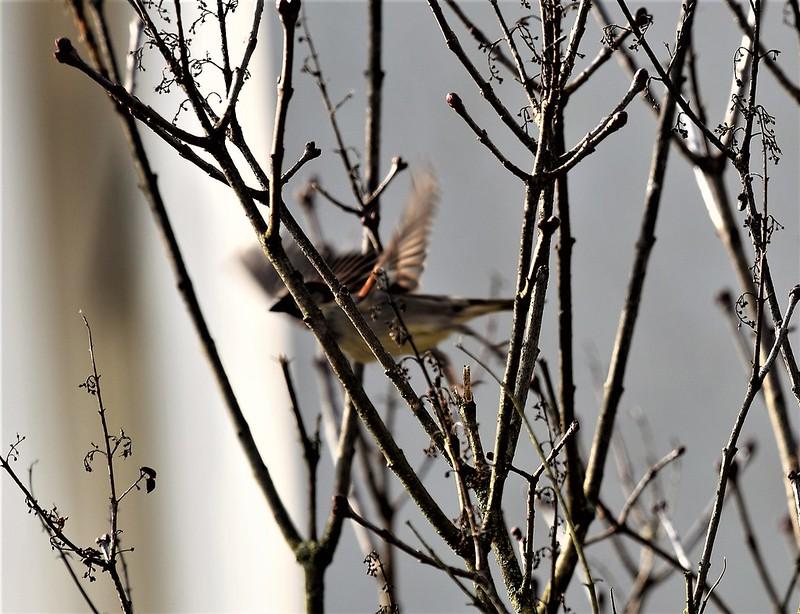 Sparrows 01.02 (3