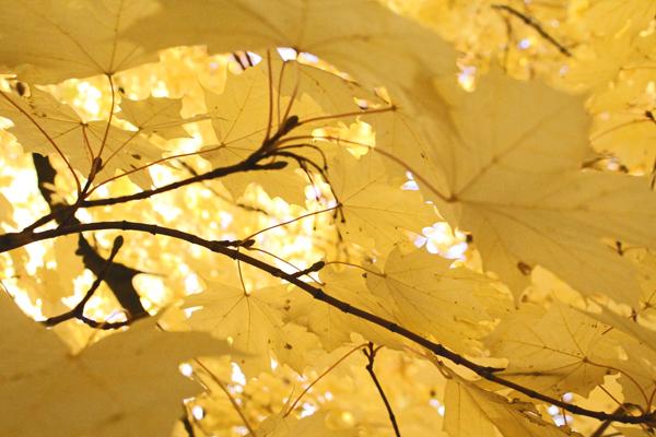 fall rochester ny