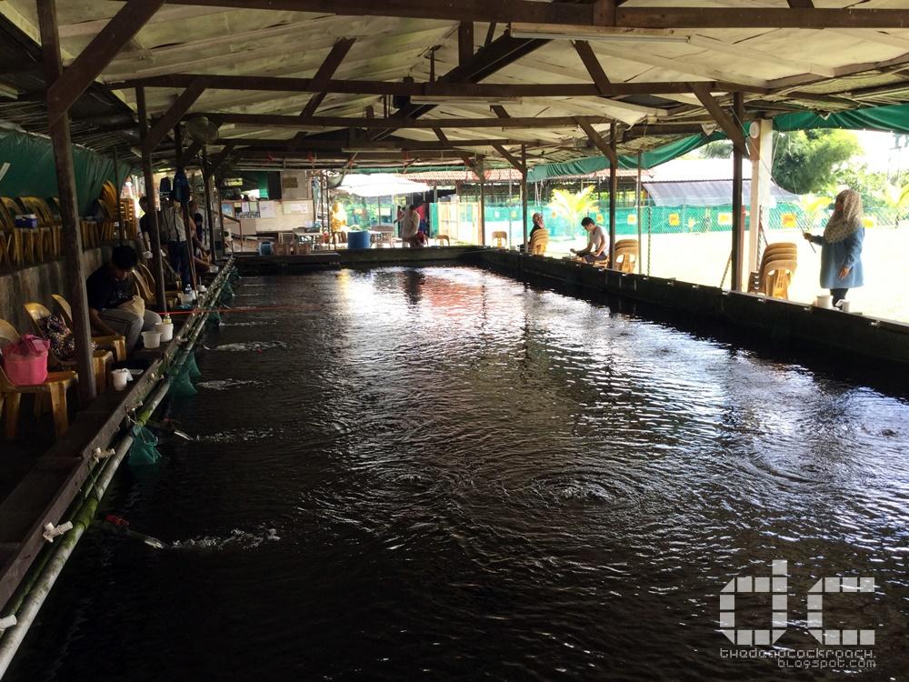 farm, farm tour, farmart centre, singapore, where to go in singapore, 农市中心, 農市中心, review,farmart,prawning