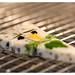 Culinary Communion Plates & Presentations: Session 2