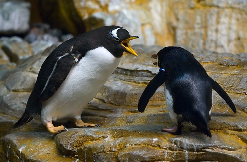 Arguing Penguins | by Adam Arroyo
