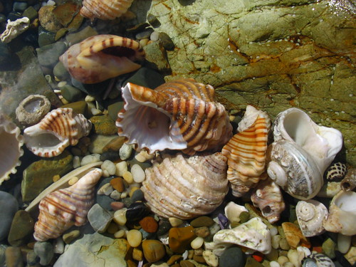 rockpool shells | by *omnia*