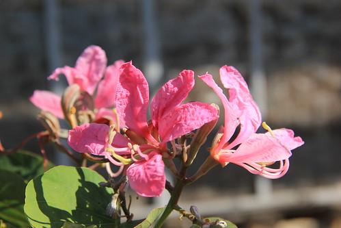 Flower, Inle Lake