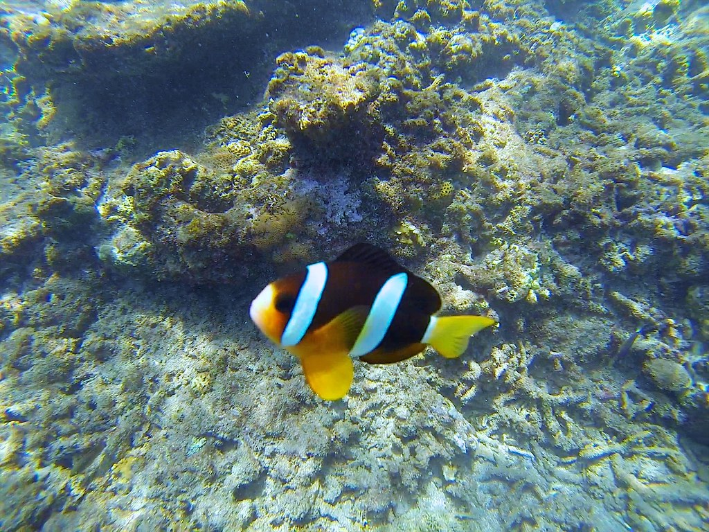 Black Nemo