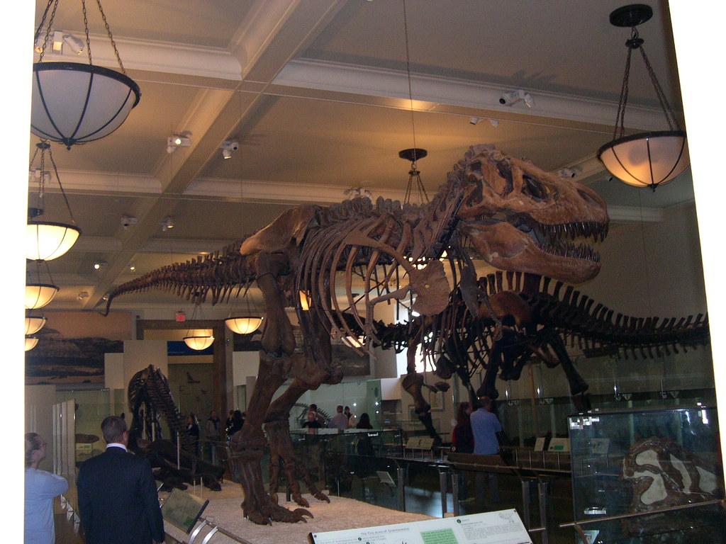 Tyranosaurus Rex en el Museo Americano de Historia Natural