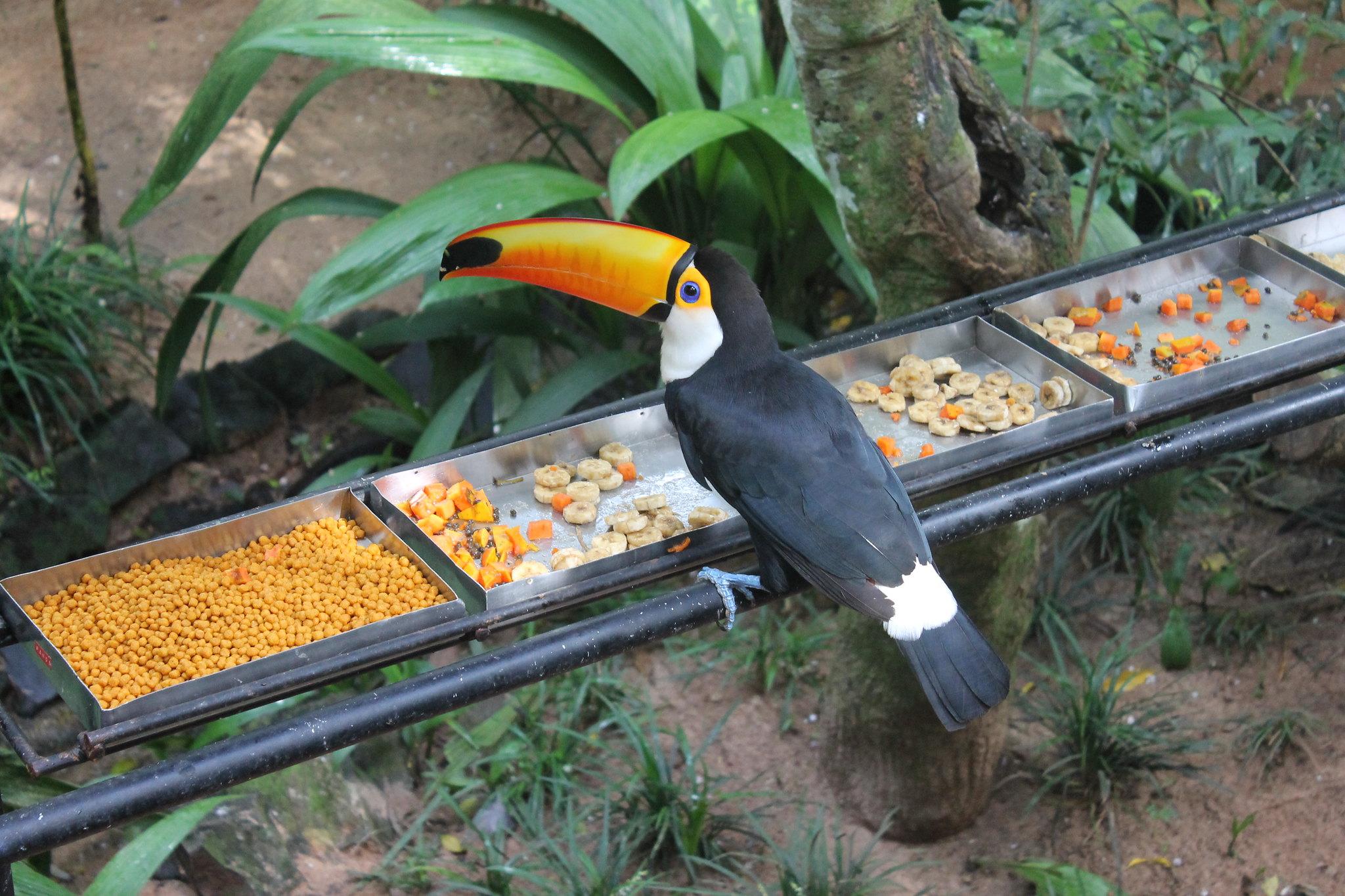 parque-das-aves12