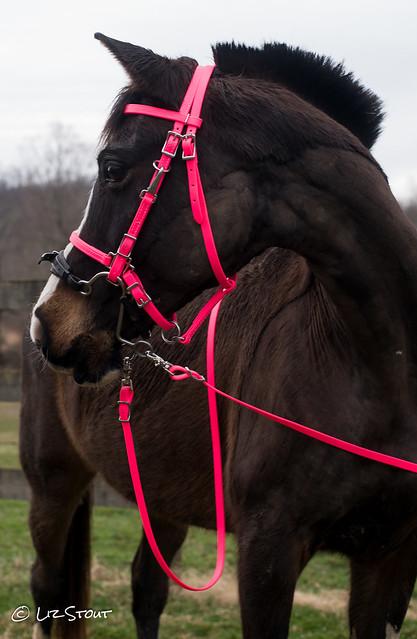 03052017 Q 2 Horse Tack-15