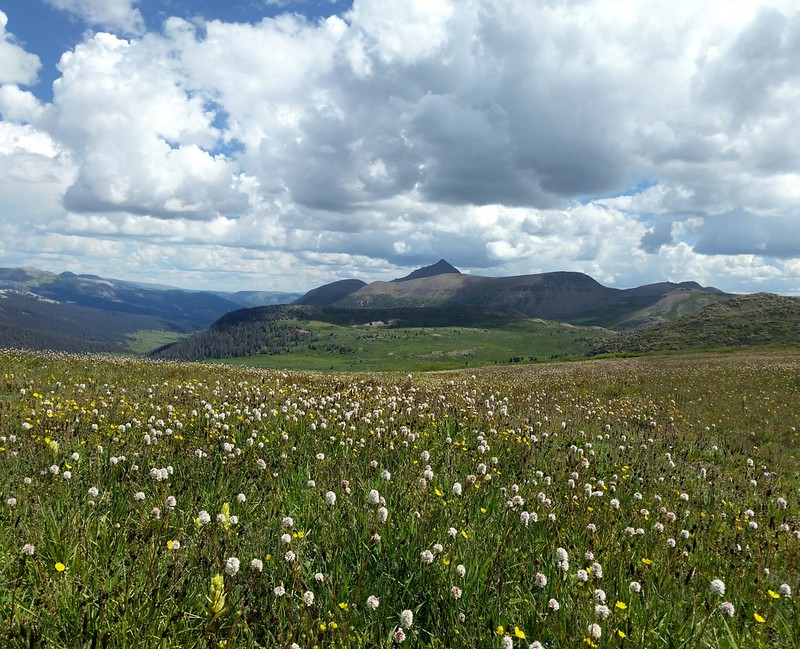Meadows of wildflowers looking northeast from the Continental Divide Trail north of Rock Pass